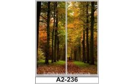 Фотопечать А2-236 для шкафа-купе на две двери. Лес
