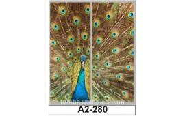 Фотопечать А2-280 для шкафа-купе на две двери. Павлин