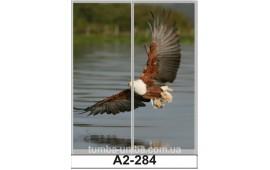 Фотопечать А2-284 для шкафа-купе на две двери. Орёл
