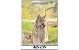 Фотопечать А2-285 для шкафа-купе на две двери. Рысь