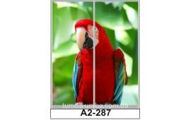 Фотопечать А2-287 для шкафа-купе на две двери. Попугай