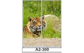 Фотопечать А2-300 для шкафа-купе на две двери. Тигр