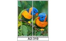 Фотопечать А2-310 для шкафа-купе на две двери. Попугаи