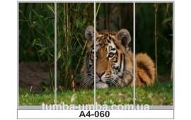 Фотопечать А4-060 для шкафа-купе на четыре двери. Тигр