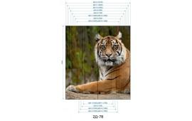 Фотопечать 2Д-78 для шкафа-купе на две двери. Тигр